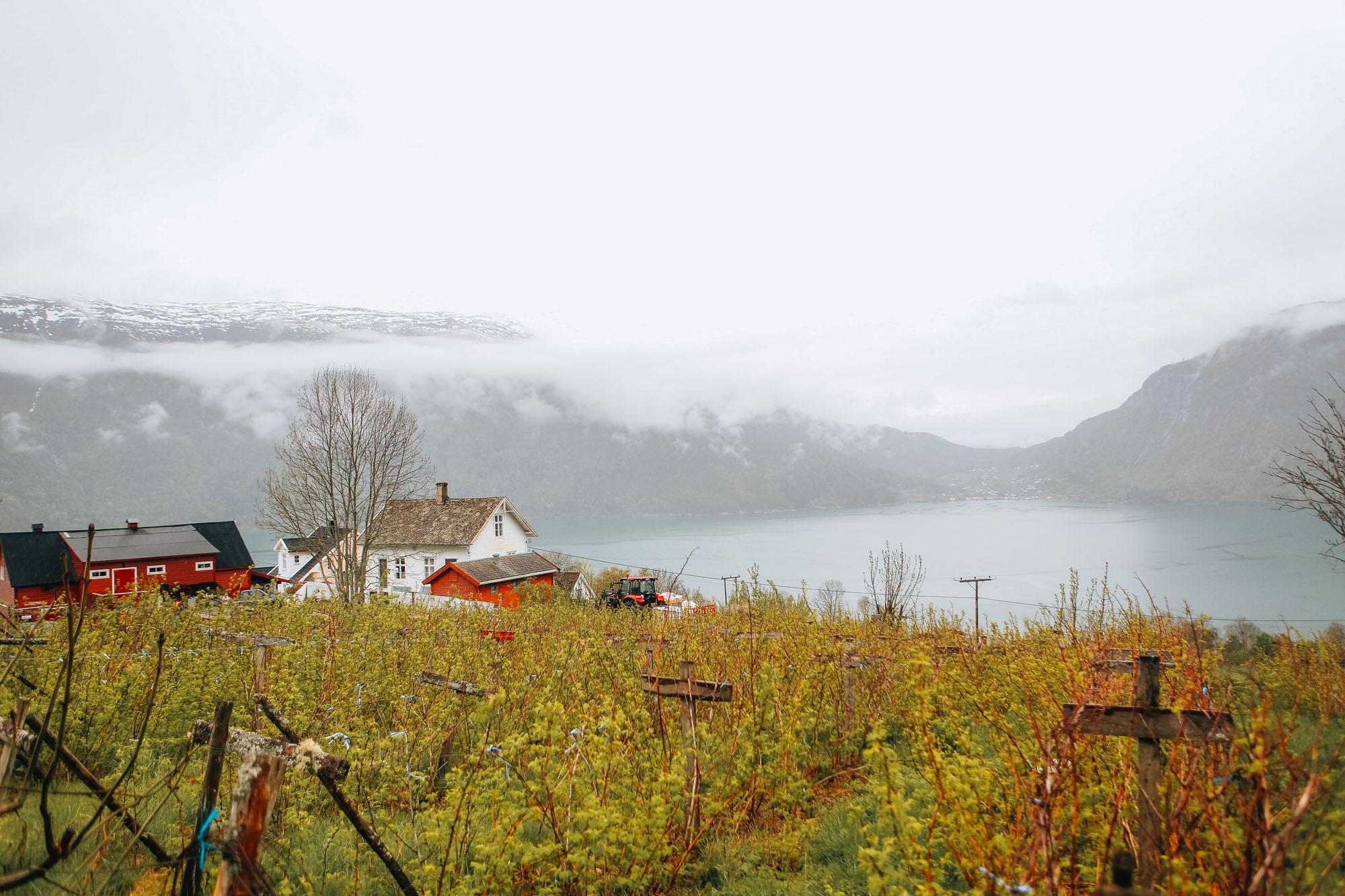 urnes-eglise-boit-debout-norvege